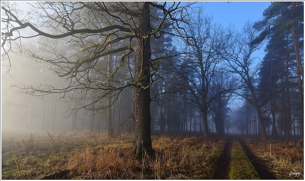 Kobiór lasy