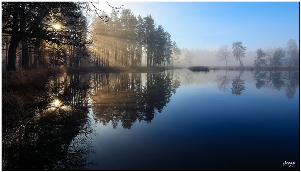 Kobiór leśne jezioro