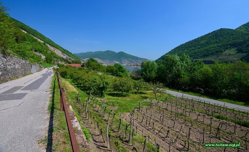 WACHAU Naddunajska dolina Wina